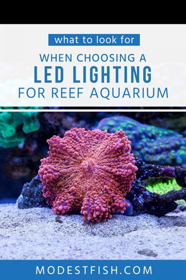 Best Led Lights For Reef Tanks In 2019 Reviewed Reef Tank Fish Care Reef Tank Aquascaping