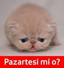 Bildergebnis für PAZARTESİ