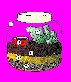 El ciclo del agua en una botella. Interesante experimento para demostrar cómo funciona este ciclo. #conocimientodelmedio #primaria