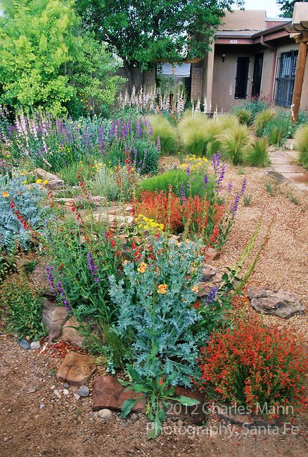 In the southwest and Rocky Mountain areas, water wise landscape designs come in all colors and shapes and incorporate a wide range of both nativespecies as well as appropriate adapted plants, ranging from succulents and cacti to endemic penstemons and traditional perennials. Charles Mann's garden in Santa Fe features pensetemons, feather grass and other drought tolerant plants.
