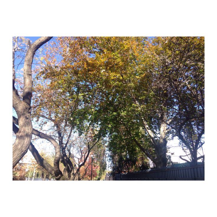ACG // árbol