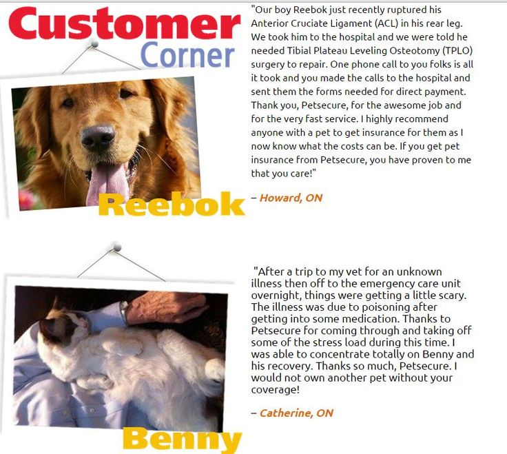 From the Sept. 2014 of our eTails newsletter: http://www.petsecure.com/etails/september-2014/#customer