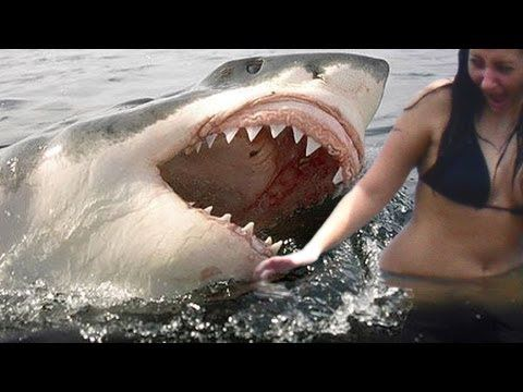 "Un-Censored Link http://www.youtube.com/watch?v=D52Pr9JXRNM Cocoa Beach Florida where a real shark attack on surfer is caught on video. Surfer valiantly fights of shark in shallow waters. Original ""Shark Bite"" http://www.youtube.com/watch?v=MWiUyRpPwBY"