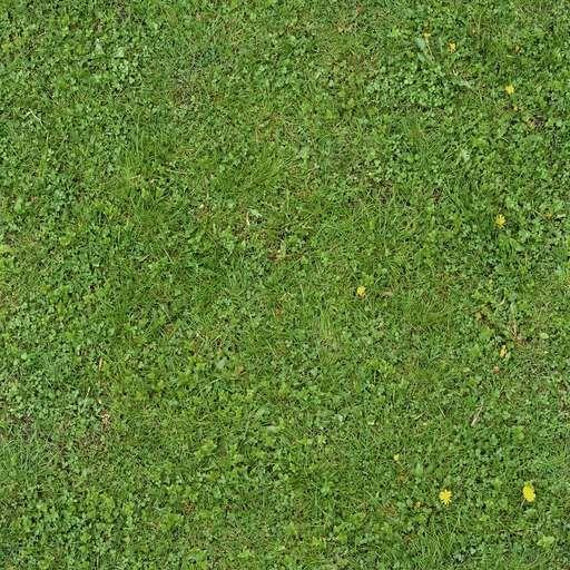 Wild Grass In 2019 Plant Texture Tiles Texture Grass