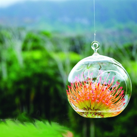 Orange Protea glass ball