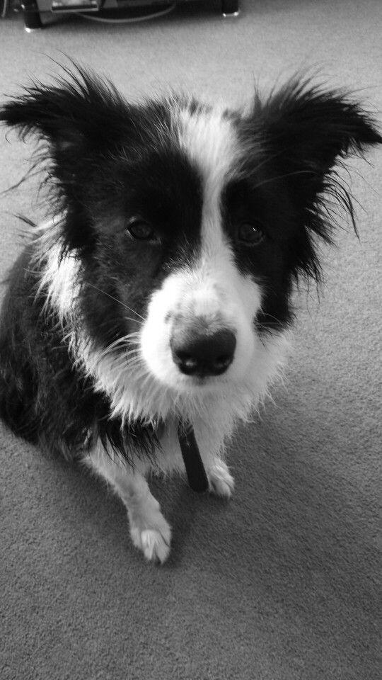 My dog after her bath.