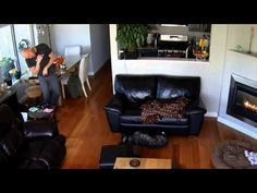 Sleeping dog falls off couch but doesn't care.