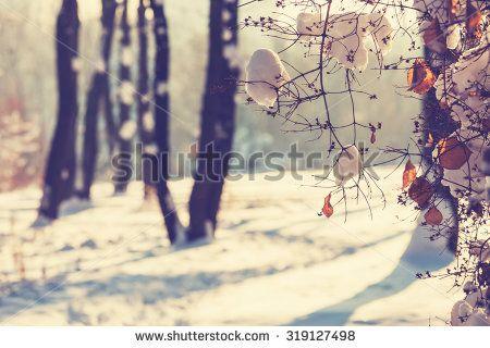 Free Image on Pixabay - Wintry, Mountain, Snow
