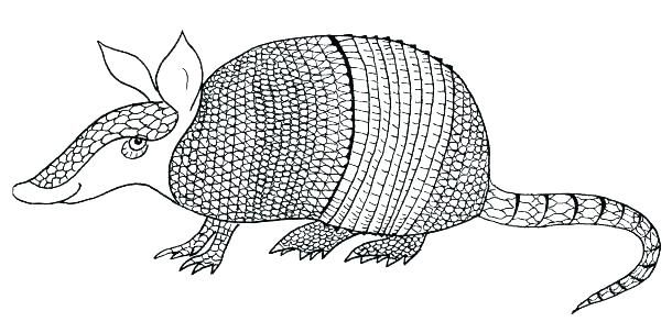 Armadillo Coloring Pages Armadillo Coloring Page Armadillo Coloring Page Armadillo Coloring Page Ar Coloring Pages Free Printable Coloring Pages Coloring Books