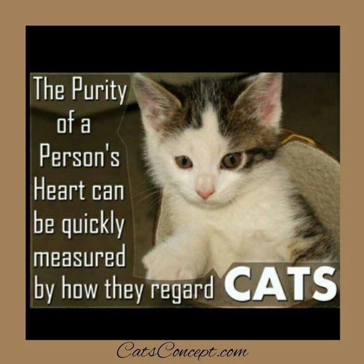 Cats And Kittens Quotes Animals In 2020 Cat Quotes Kitten Quotes Cats