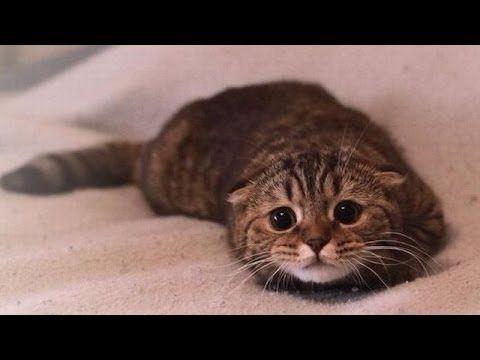 Quelle tête fait un chat quand il se sent coupable