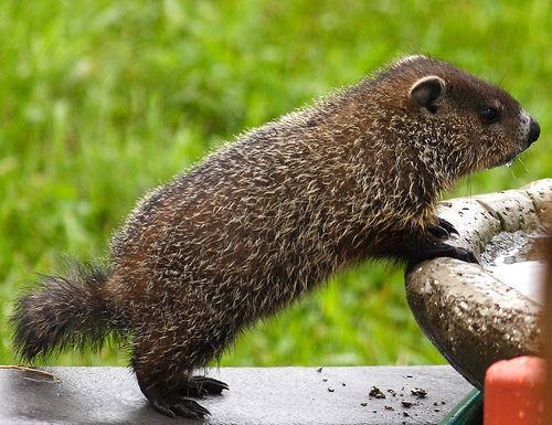 """Happy Groundhog Day! """"It's a doozy!"""""""