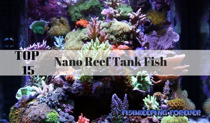 Top 15 Nano Reef Tank Fish Saltwater Fish Marine Fish Invertebrates Corals Marine Fish Tank Reef Tank Saltwat Nano Reef Tank Reef Tank Saltwater Aquarium Fish