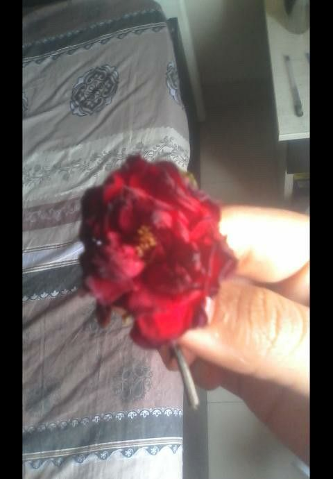 A Rose in my Heart