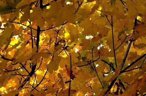 *Etwas Licht Teilen*   --   by Stefanie Neumann on 2013-10-21