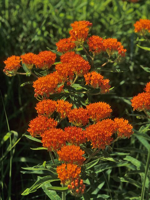 29 best native perennials