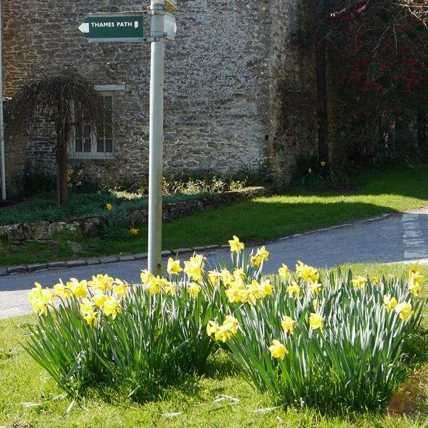 Thames Path:  Daffodils around the signpost at Ewan