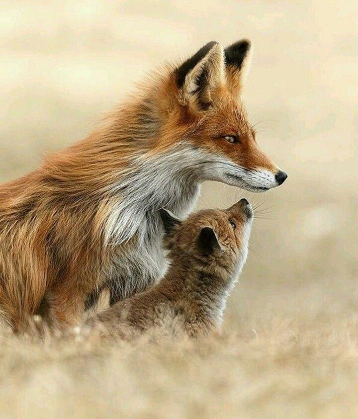 С мамой- лисой