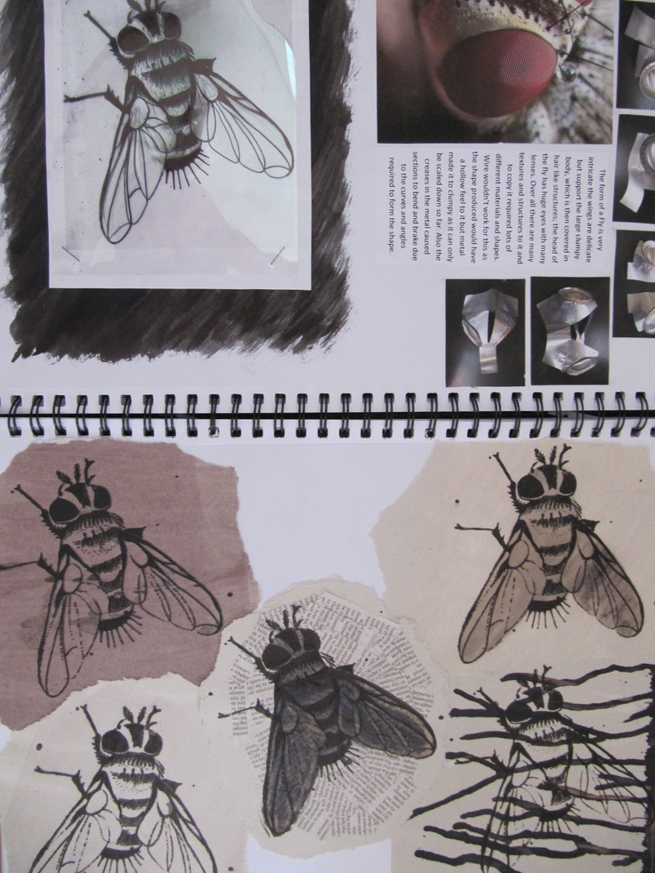 insects - sketchbooks