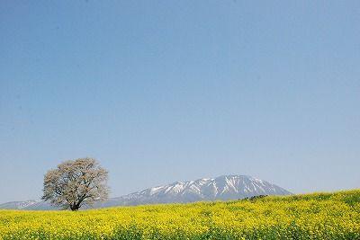 Koiwai Farm, Iwate Pref.