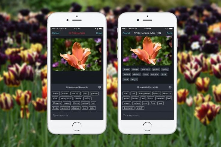 Shutterstock Improves the Keywording Process With New Auto-tagging Feature for Mobile