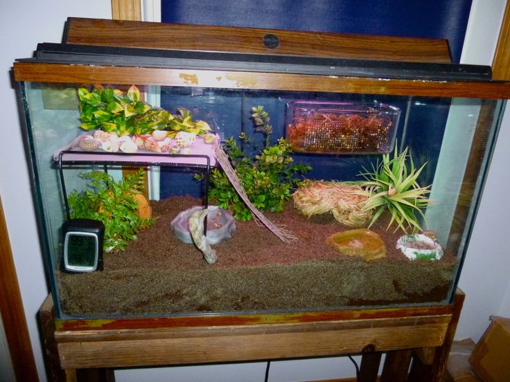 20+ gallon tank habitat, with alternate plastic tote habitat idea for portability.