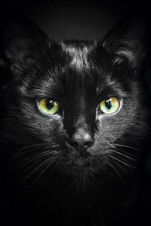 schwarze #Katze #Fotografie