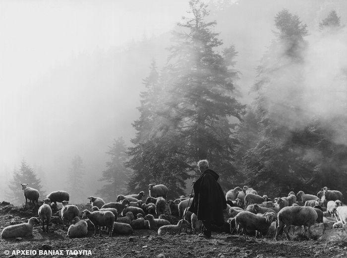 Τάκης Τλούπας: Ο φωτογράφος με τη βέσπα-Ο βοσκός με το κοπάδι Νέγρι 1975