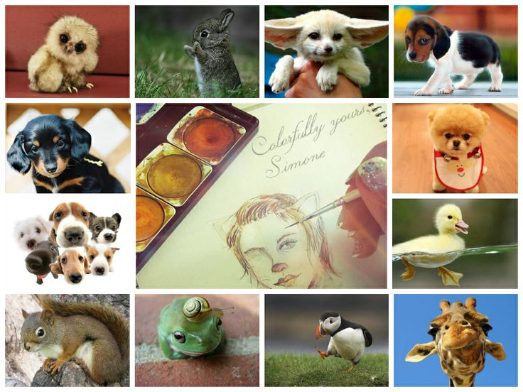 """Hello, friends!  For my next watercolour painting I would like to ask for your help... Suggest a cute animal photo (it can even be a funny picture of your own pet), the one that inspires me the most will be chosen for my next """"colourful explosion""""   https://www.facebook.com/simona.encheva"""