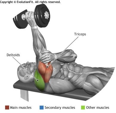 TRICEPS - ONE ARM LYING DUMBBELL TRICEP EXTENSION
