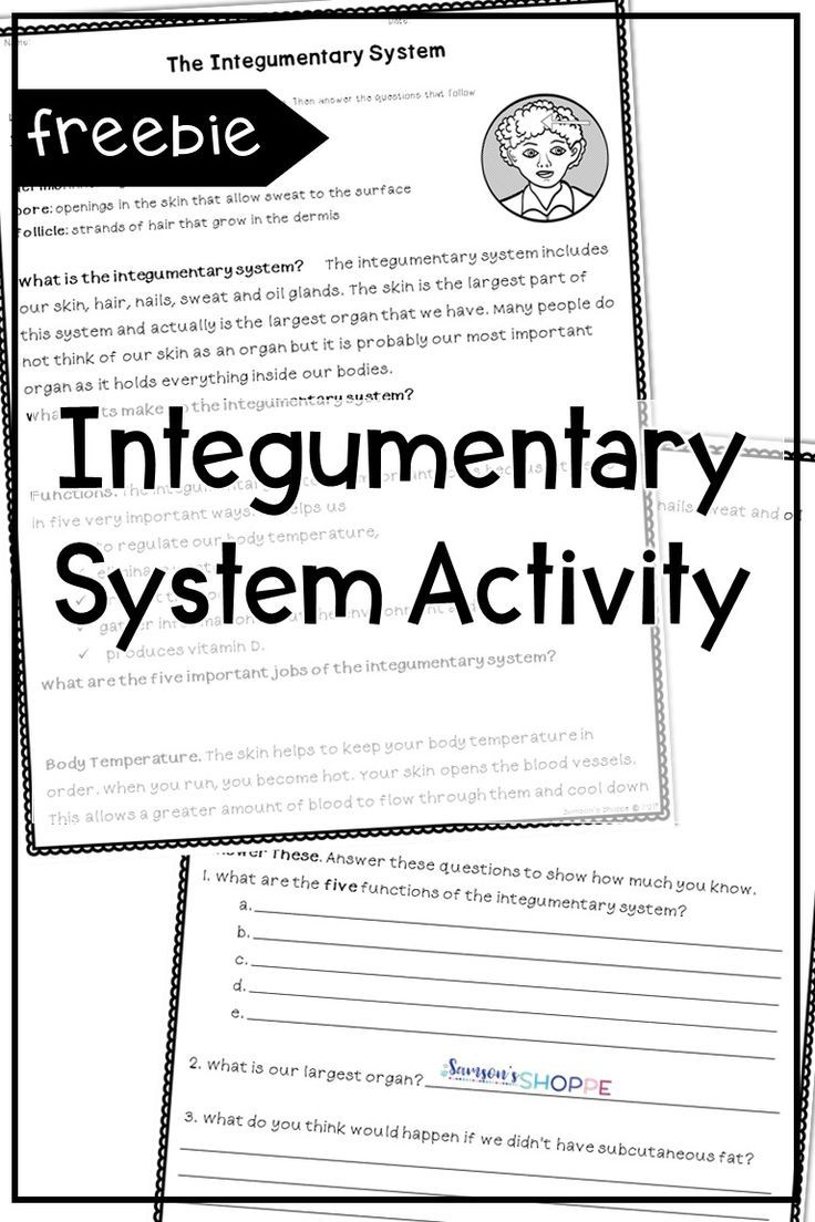 Integumentary System Human Body Free Your Grade 4 5 And 6 Students Will Learn All About T Human Body Systems Integumentary System Human Body Activities