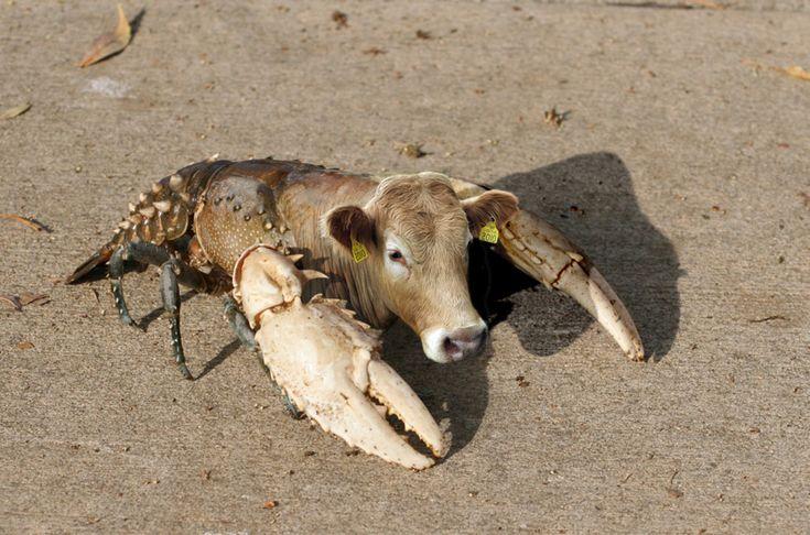 Мутанты животные в чернобыли картинки