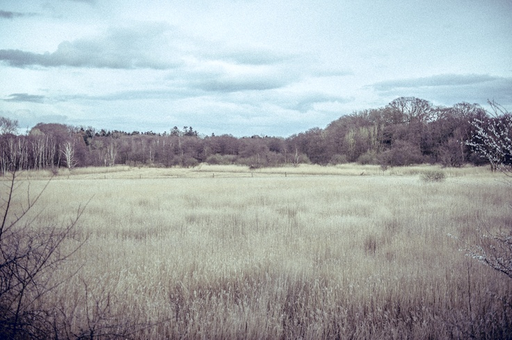 A field at the edge of my home town