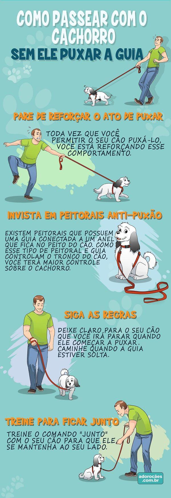 Como Ensinar o Cachorro a Passear Sem Puxar a Guia - http://www.adorocaes.com.br/como-ensinar-o-cachorro-a-passear