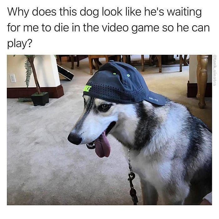 Next Gamer Waiting Time ?     http://onlineclock.net/games/  #Games #Gamer #GamersUnite #Game #Gaming #VideoGames #Dogs #Dog #DogLovers #Puppies #Pet #Pets #PetOwners #Cats #Cat #CatLovers #Caturday #CaturdayEveryday #CatLover