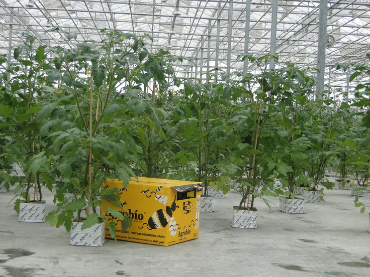 Verlengde opkweek tomatenplanten door Combinations