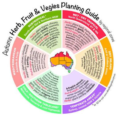 Image result for australian winter vegetables to grow