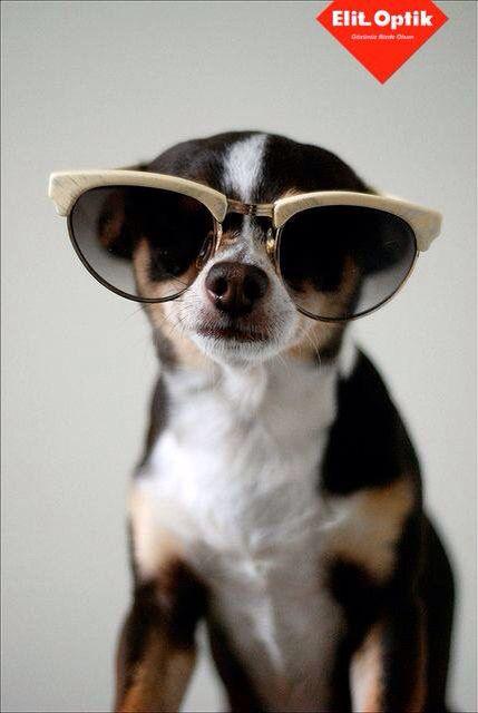 Hazır olun bolca dinlenmeye, stresten uzaklaşmaya çok az kaldı. Bu yüzden #cuma candır, gerisi heyecandır ☺️ #elitoptik #gunaydin #istanbul #sunglasses #likes #nice #eyewear #girl #man #follow #fashion #moda #style #love #followme #fotograf #photo #happy #turkiye #smile #izmir #summer #cool #goodmorning #friday