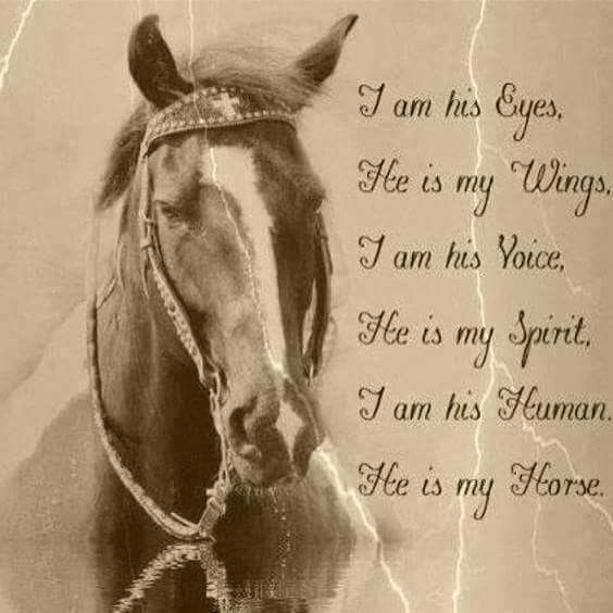 Beautiful horse pictures with quotes