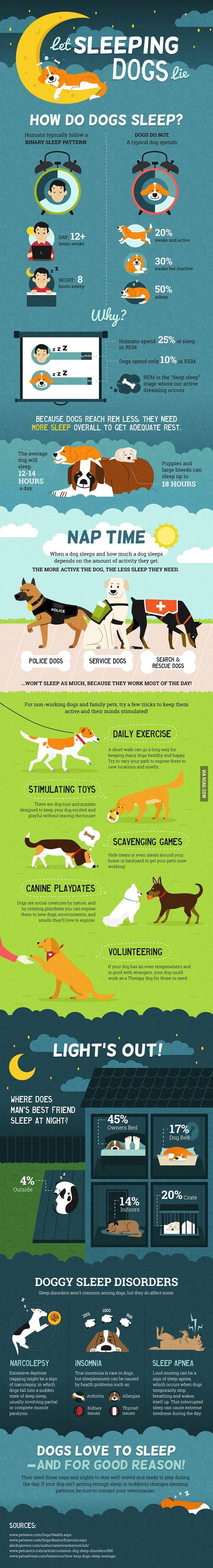 How Much Sleep Do Dogs Need? - 9GAG