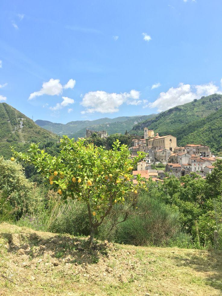 Lemontree in the beautiful landscape of #Papasidero