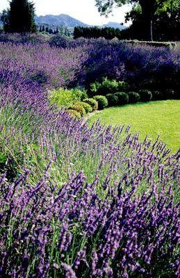 142 Best Images About Color Love The Color Lavender On Pinterest Growing Lavender