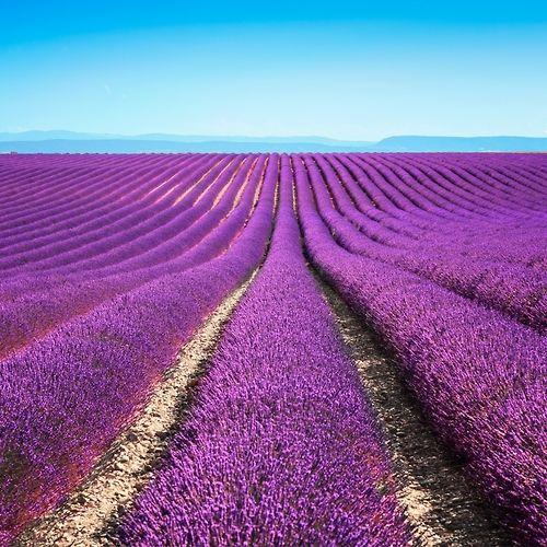 184 best nuances de violet images on pinterest lavender. Black Bedroom Furniture Sets. Home Design Ideas
