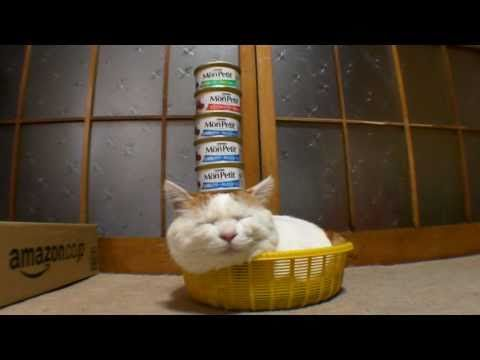 Cat Sleep Sleeping Basket Cans Food Stacked