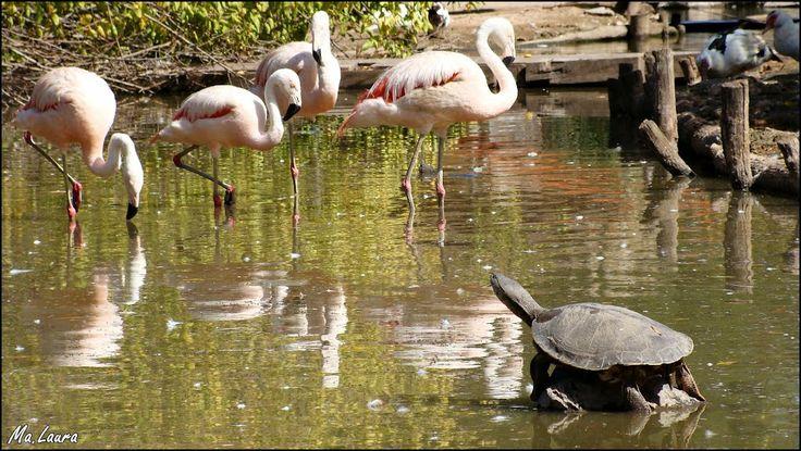 Zoológico de Luján - Au. Acceso Oeste, Luján, Buenos Aires, Argentina