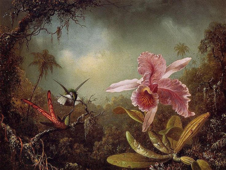 File:Orchid with Two Hummingbirds 1871.jpeg - Wikimedia Commons