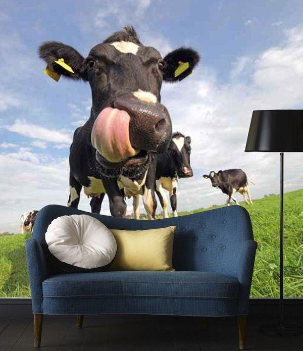 Zwiarzęta - łaciata krowa z wielkim ozorem