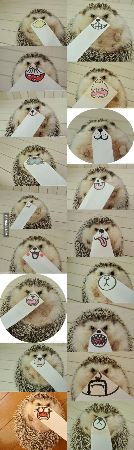 The Faces Of This Hedgehog ❤️
