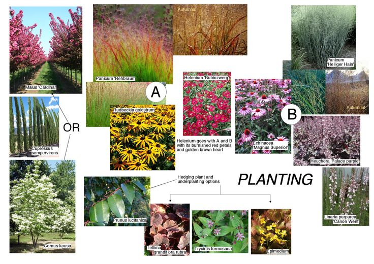 LK's planting mood board with a choice of complimentary cloud pallets