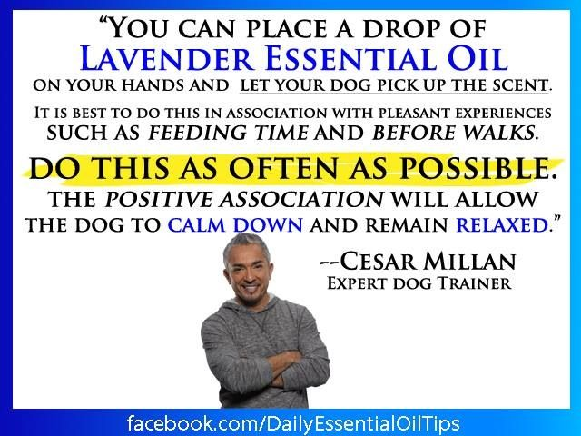 doTERRA essential oils. Cesar Milan uses doTERRA oils on dogs. Pretty amazing…